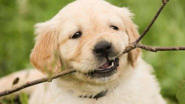 Pat a pooch – your first step to good health
