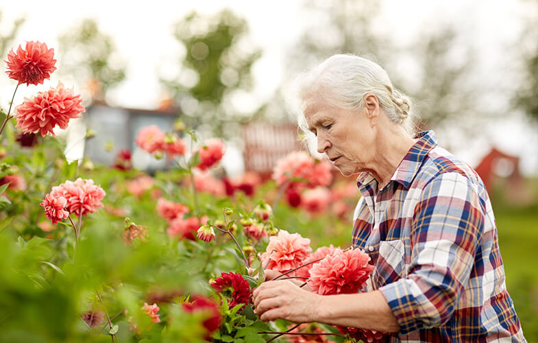 Senior woman tending to big red flowers