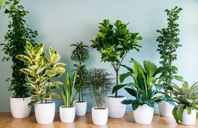 Picture of various indoor plants