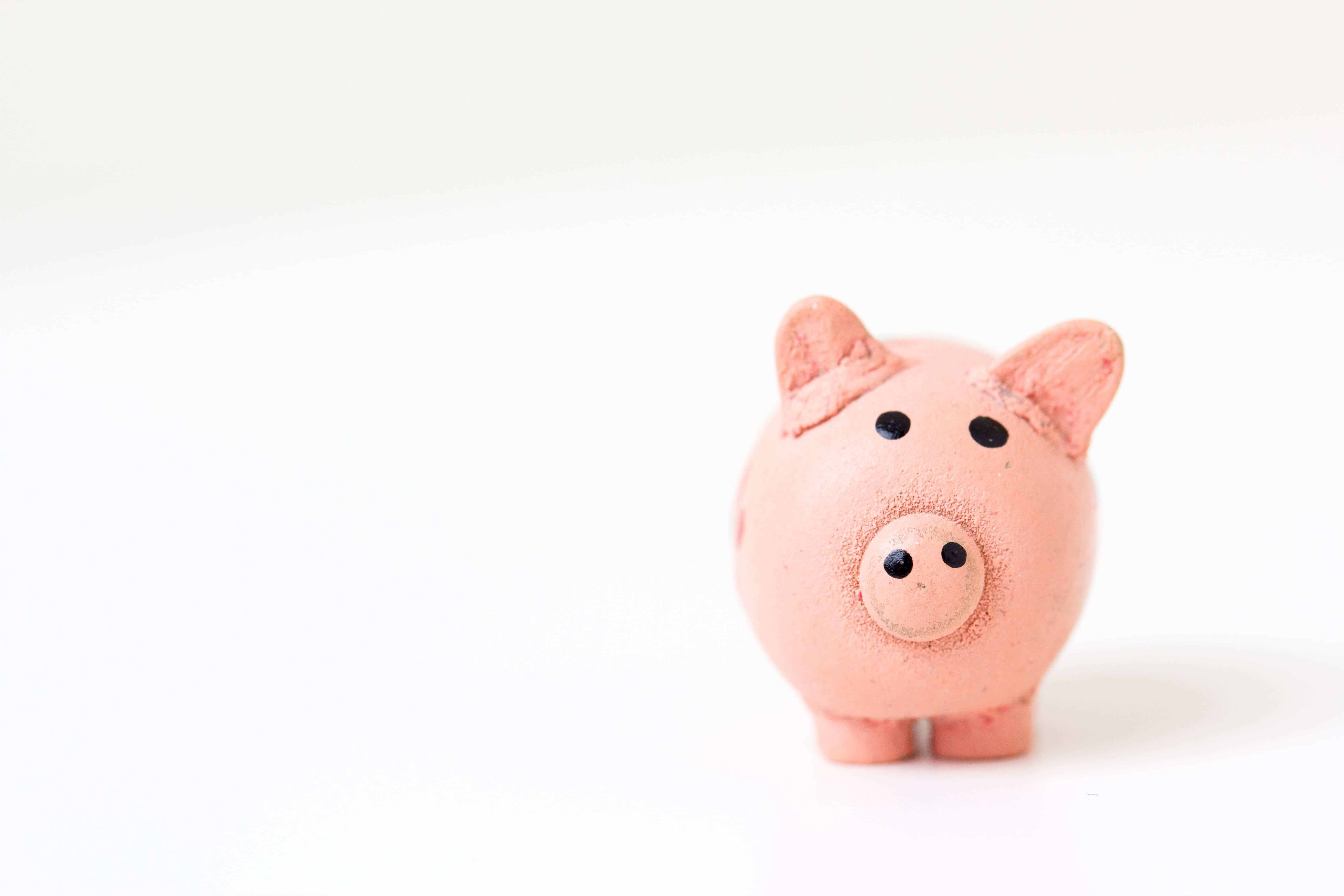 A pink ceramic pig on white background