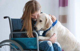 Assistance animals and the NDIS