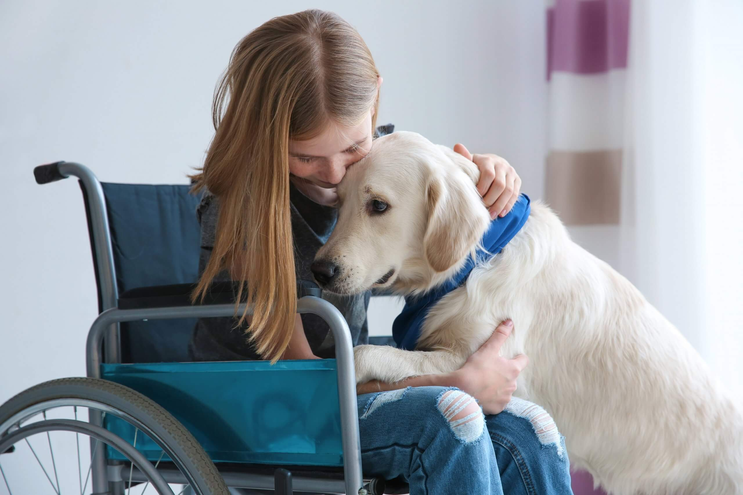 NDIS and assistance animals
